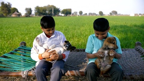 Cute young children happily playing with puppies while sitting on a charpai