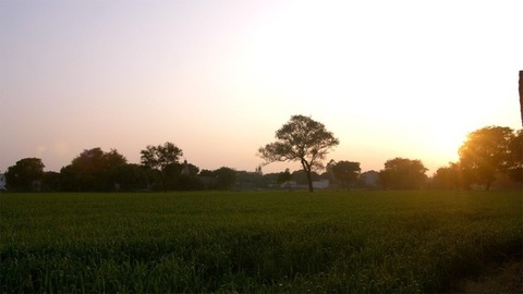 Pan shot of magnificent farmland in Delhi/NCR - agriculture concept in the village