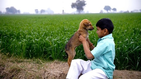 An Indian village boy playing with a small dog sitting near a green farmland