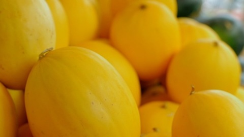Healthy nutritious yellow muskmelon/Kharabooja stocked up together for selling