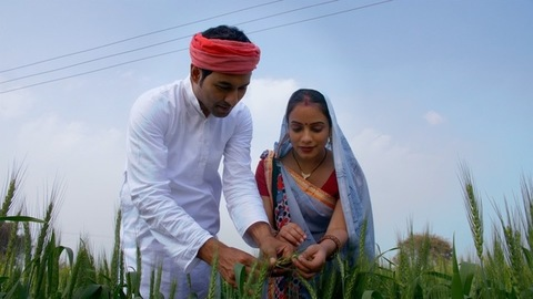 Village scene - Indian farmer in wheat crop fields with his wife. Harvest Time