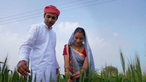 Pan shot of an Indian farmer and his wife happily looking at their growing pcrops