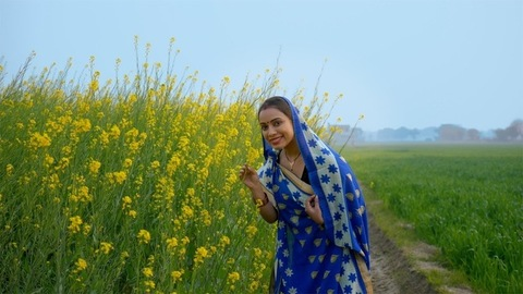 Young Indian housewife in village smelling sarso or mustard flowers