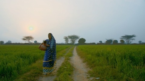 Indian village woman walking with a pitcher (Ghara) in an agricultural field