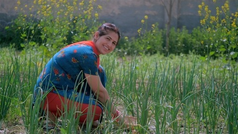 Smiling Indian female laborer plucking fresh vegetables from her green field