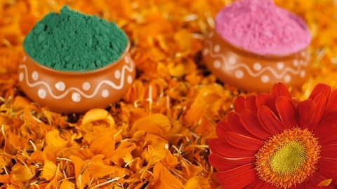 Green and pink color Gulal / Abeer in clay pots decorated for Holi celebration