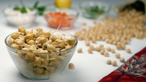 Source of protein for a vegan healthy diet - nutritious sprouted chickpeas