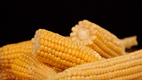 Fresh and uncooked sweet corns / Bhutta cut into halves rotating on a turntable
