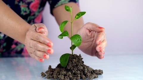 A young woman protecting a plant sapling - Go Green and save the environment