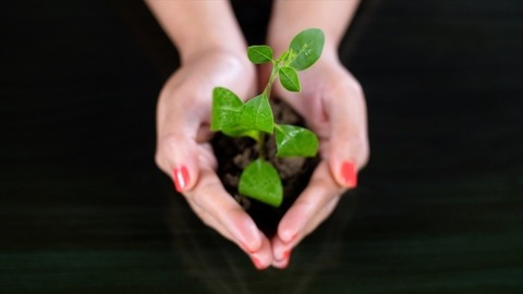 Young female protecting a plant sapling with both hands - environmental health