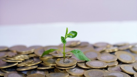 Female hand watering a young sapling planted on a bed of coins - financial growth