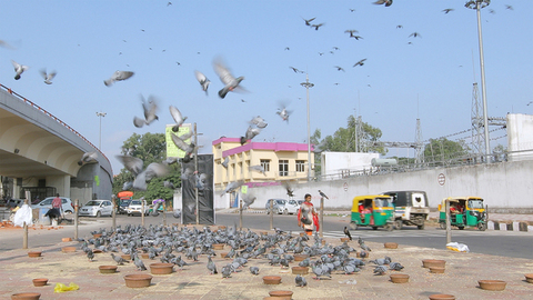Birds flying and gathering at a road crossing