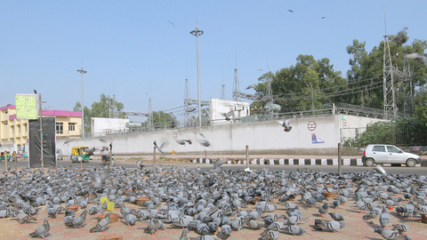 Flock of birds flying on a road crossing