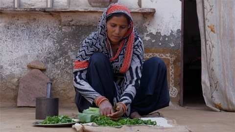 Indian women cutting mustard leaves with traditional cutter / paniki / knife - Indian village home