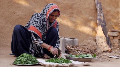 Sarson ka Saag - Indian woman cutting mustard leaf / sarson with a traditional iron cutter