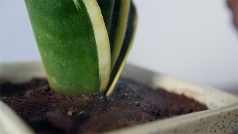 Slow motion shot of spraying water in the plant