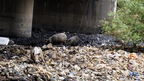 Illegal dumping ground filled with household wastes, plastic bottles, and bags